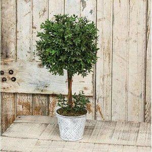 "New England Boxwood 14.75"" H Topiary"